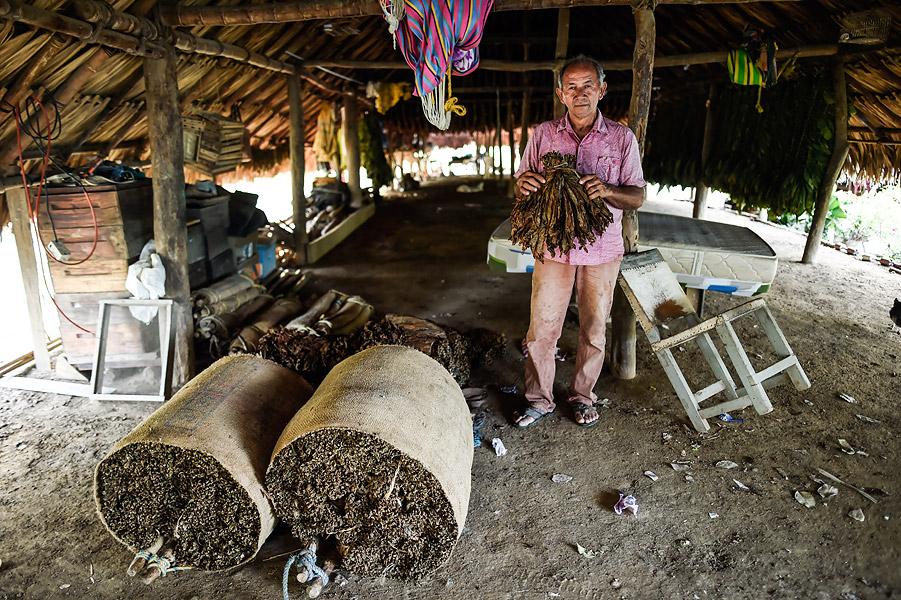 Uno de los habitantes de Chengue muestra las hojas de tabaco con las que trabajaban.