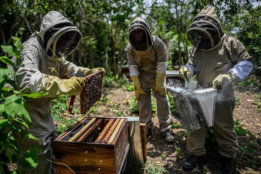 Las 159 familias de Chengue se encargan del cuidado de las 500 colmenas que tiene el proyecto.