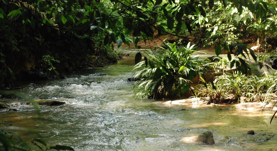 El Parque Nacional Nudo de Paramillo es considerado como la zona de reserva más importante para la generación de agua en la Costa Caribe.