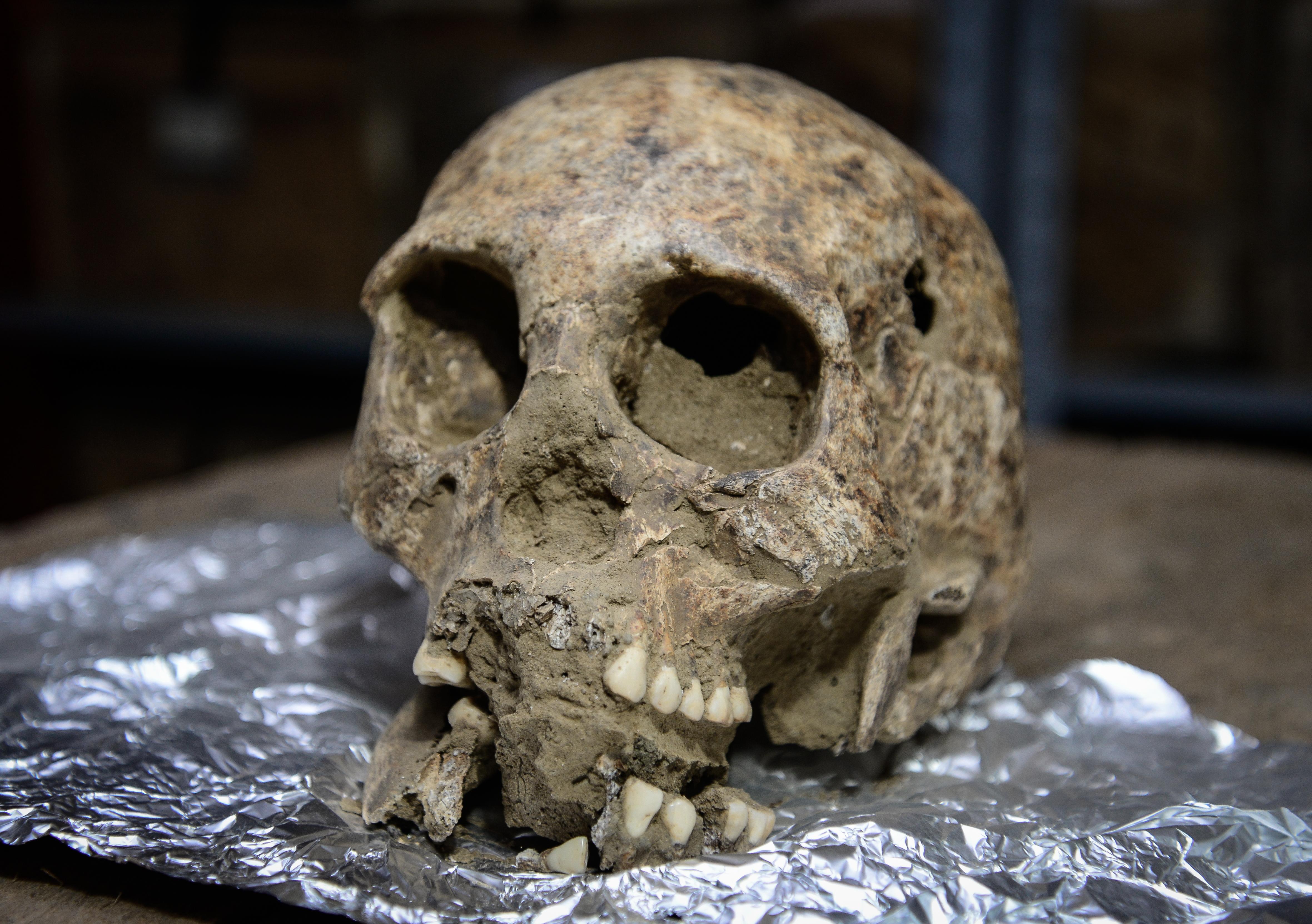 Uno de los ocho cráneos que llegaron al Muma.