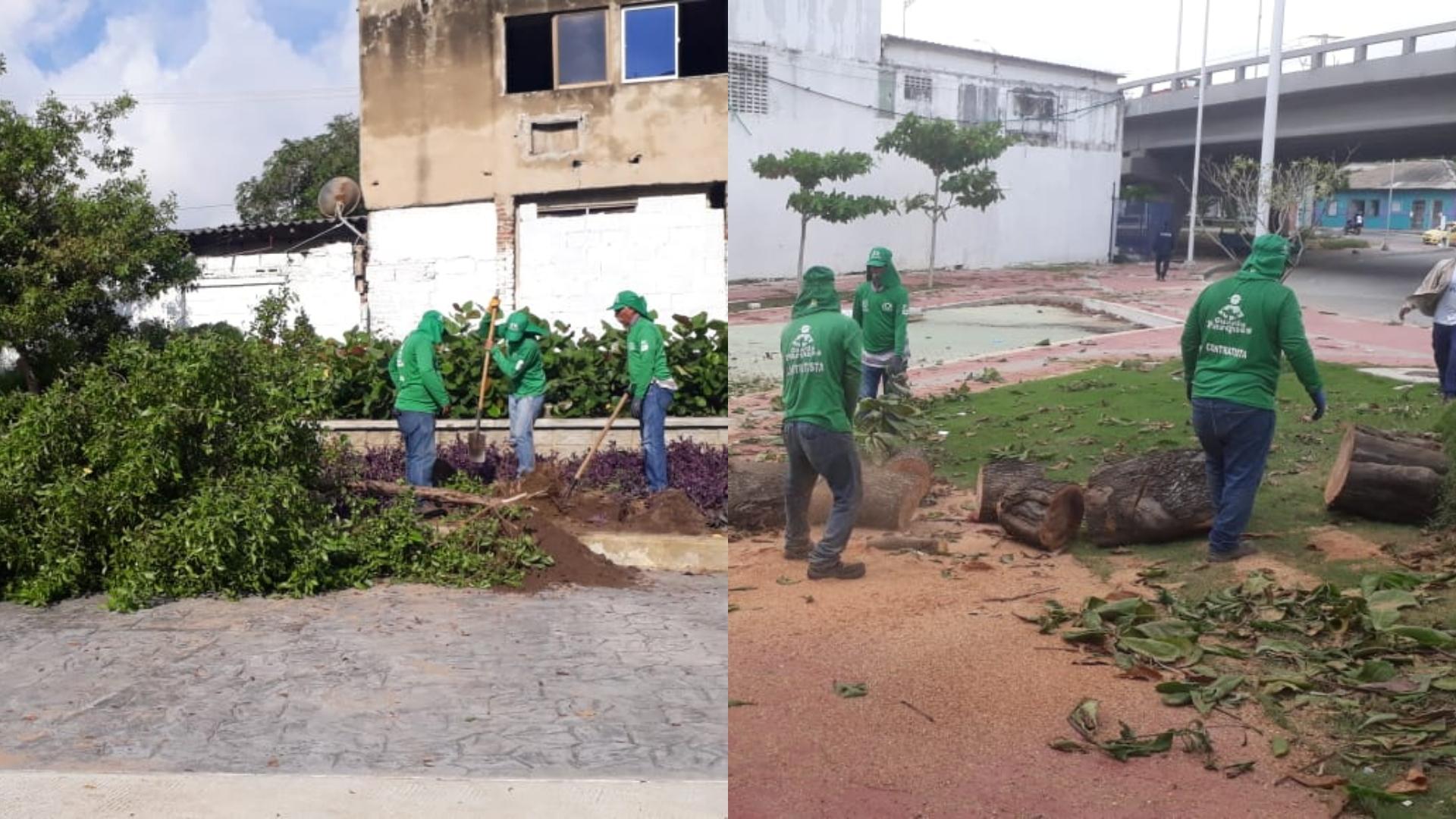 Los guardaparques realizan las labores de remoción de los árboles que fueron derribados por la fuerte brisa.