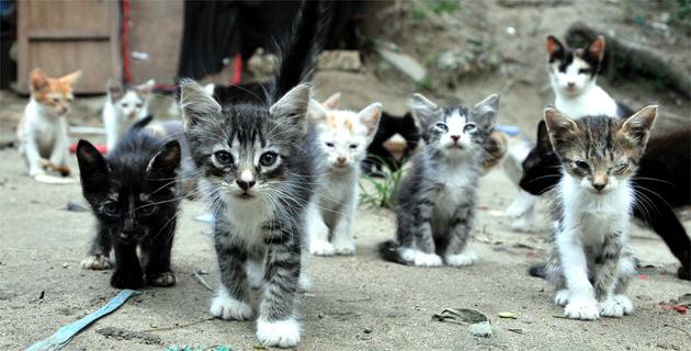Jard n bot nico hogar de los gatos botados el heraldo for Como ahuyentar gatos del jardin