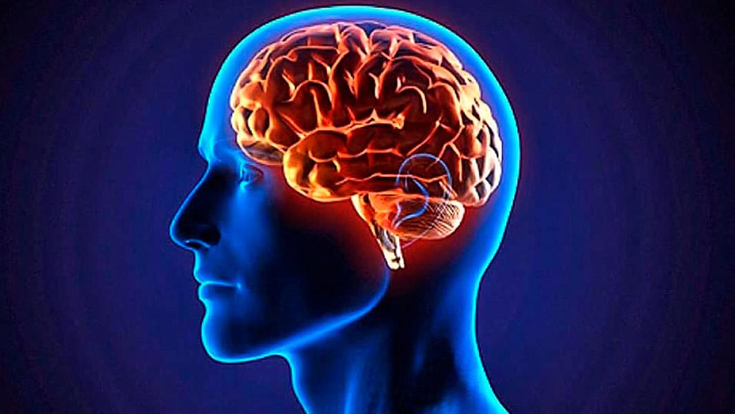 Estudio revela que una parte del cerebro sigue creciendo durante ...