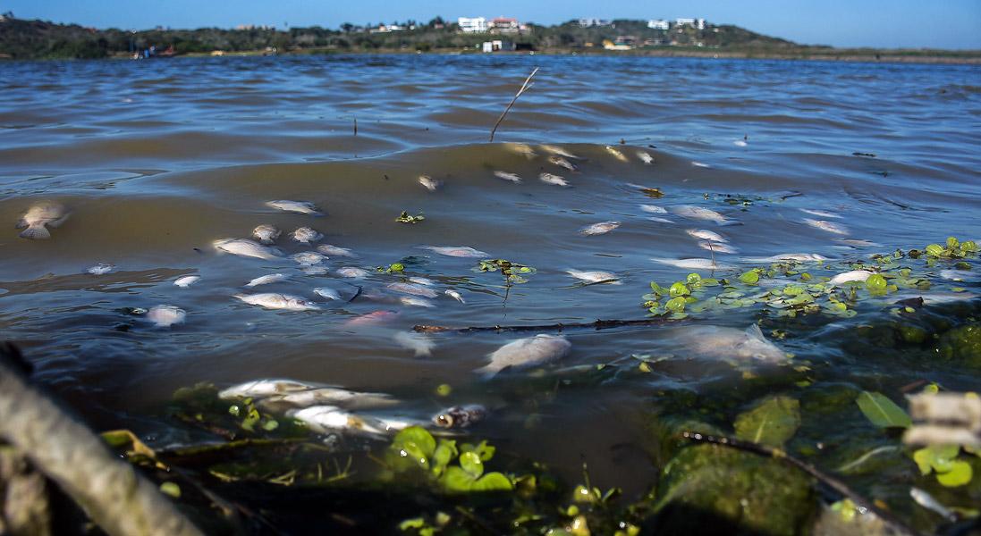 Peces muertos siguen sin ser retirados del lago El Cisne | El Heraldo