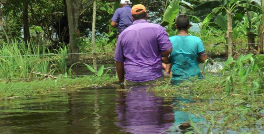 Los cultivos se convirtieron en ciénagas en algunas zonas bajas del Caribe Húmedo. Los productores arroceros esperan mejores garantías por parte del Estado para recuperar las pérdidas. En esta oportunidad la cosecha ha disminuido, por ello el reclamo de los afectados.