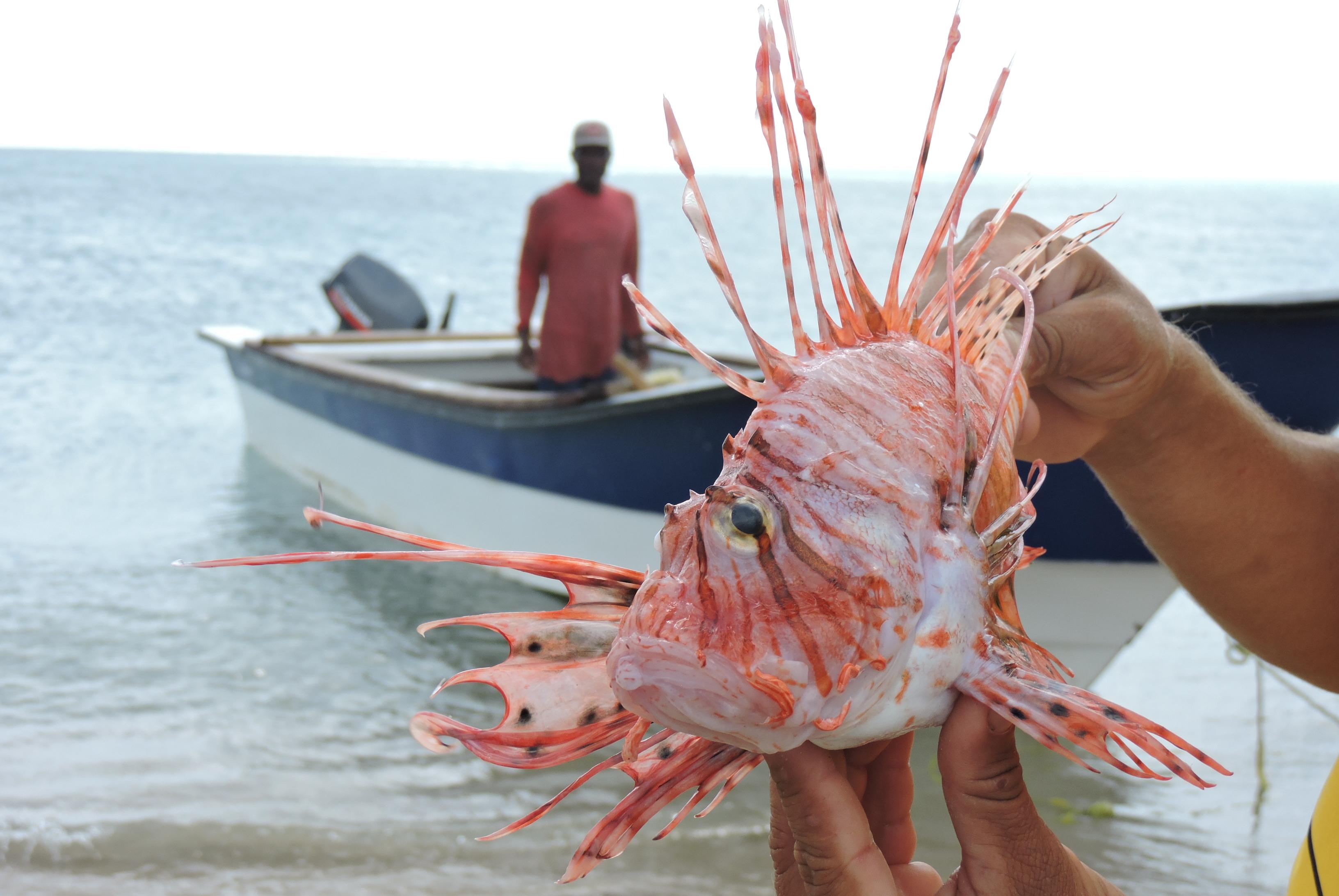 Un pescador enseña un pez león capturado en el Cabo de la Vela, zona norte de La Guajira.