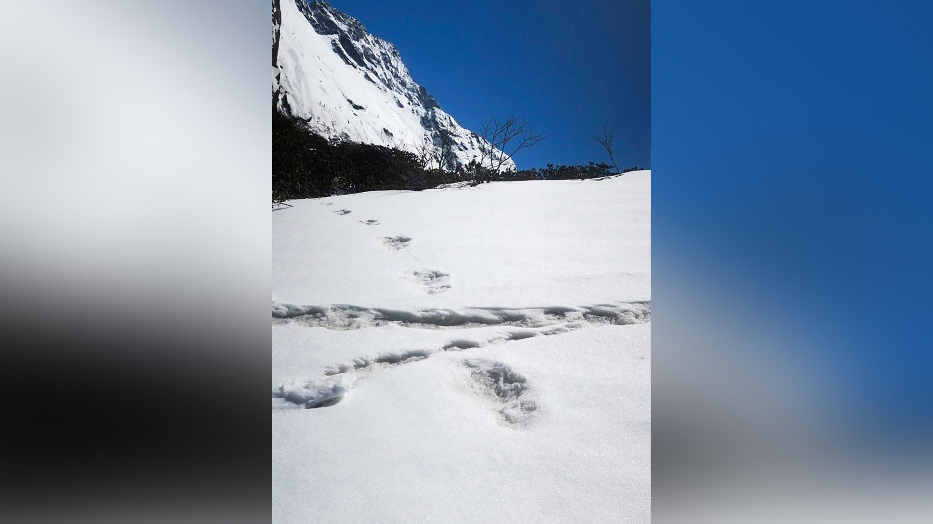 Ejército indio asegura haber encontrado huellas de 'Pie Grande'   El Heraldo