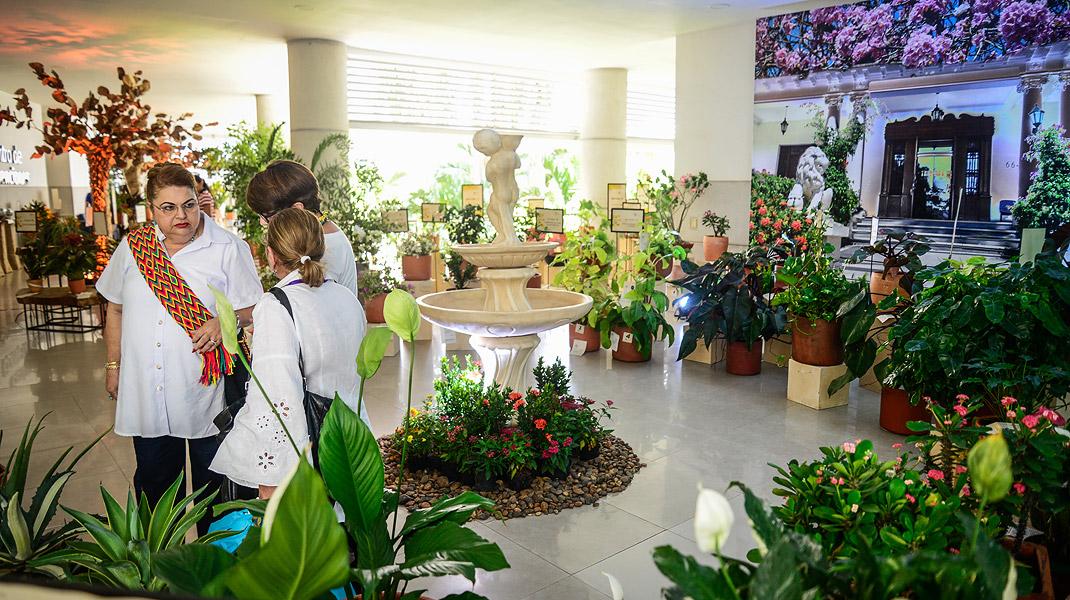 Las Flores De Colombia Son Protagonistas De Exposición El
