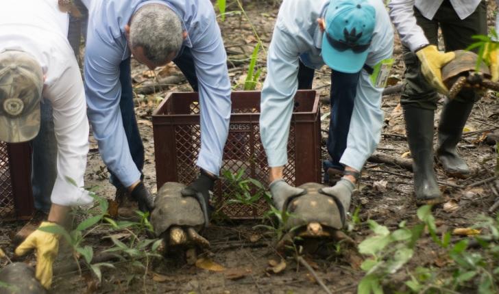 En video | Morrocoyos, guacamayas y ñeques regresaron a su hábitat en el Cesar - El Heraldo (Colombia)