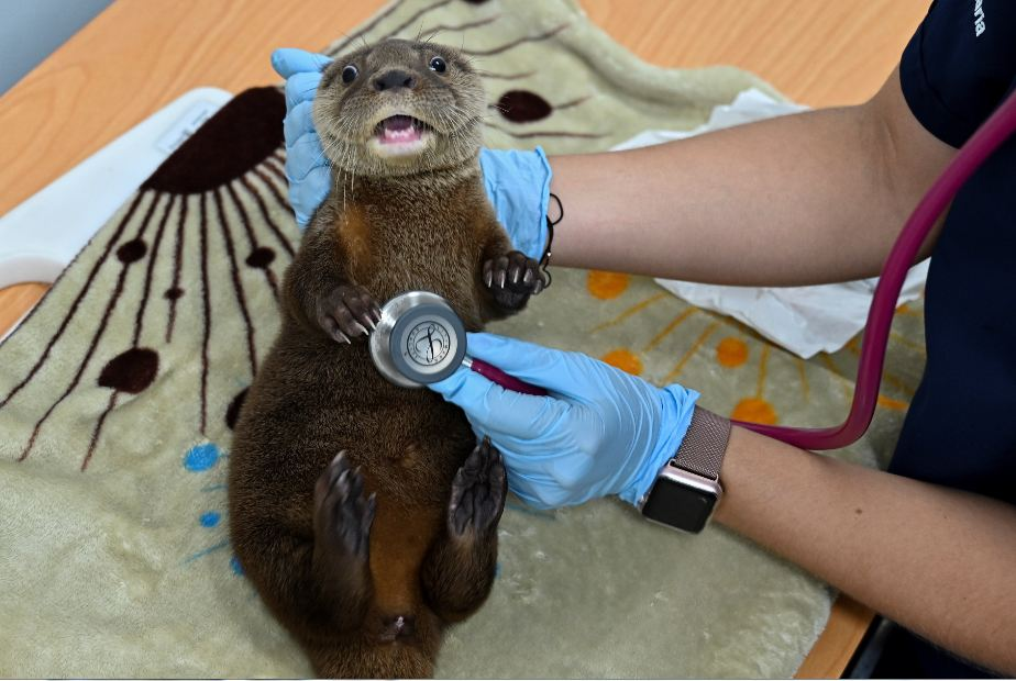 Las amenazas que enfrentan varios zoológicos colombianos por la pandemia    El Heraldo
