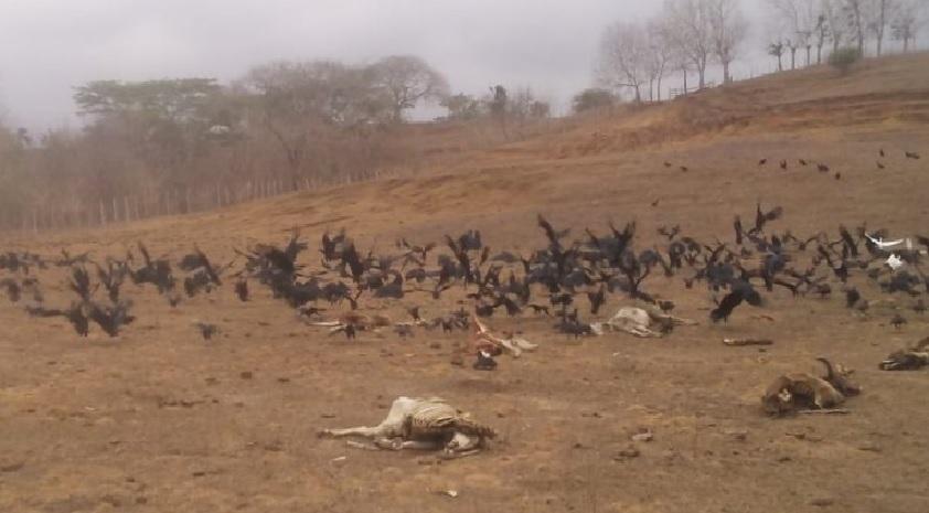 Animales muertos por la pasada sequía en Córdoba.