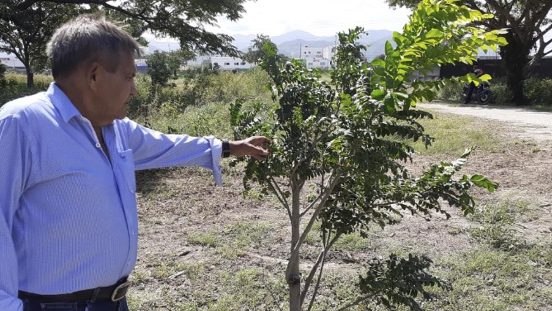 Alfonso Mendoza señala una árbol de grosella, en la granja de Unimag, una de las frutas en extinción.