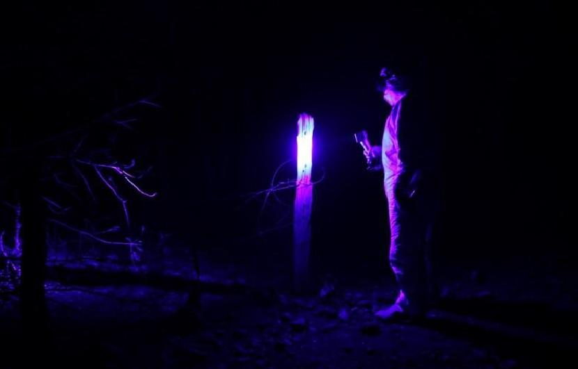 Utilización de luces forenses en una escena de crimen.