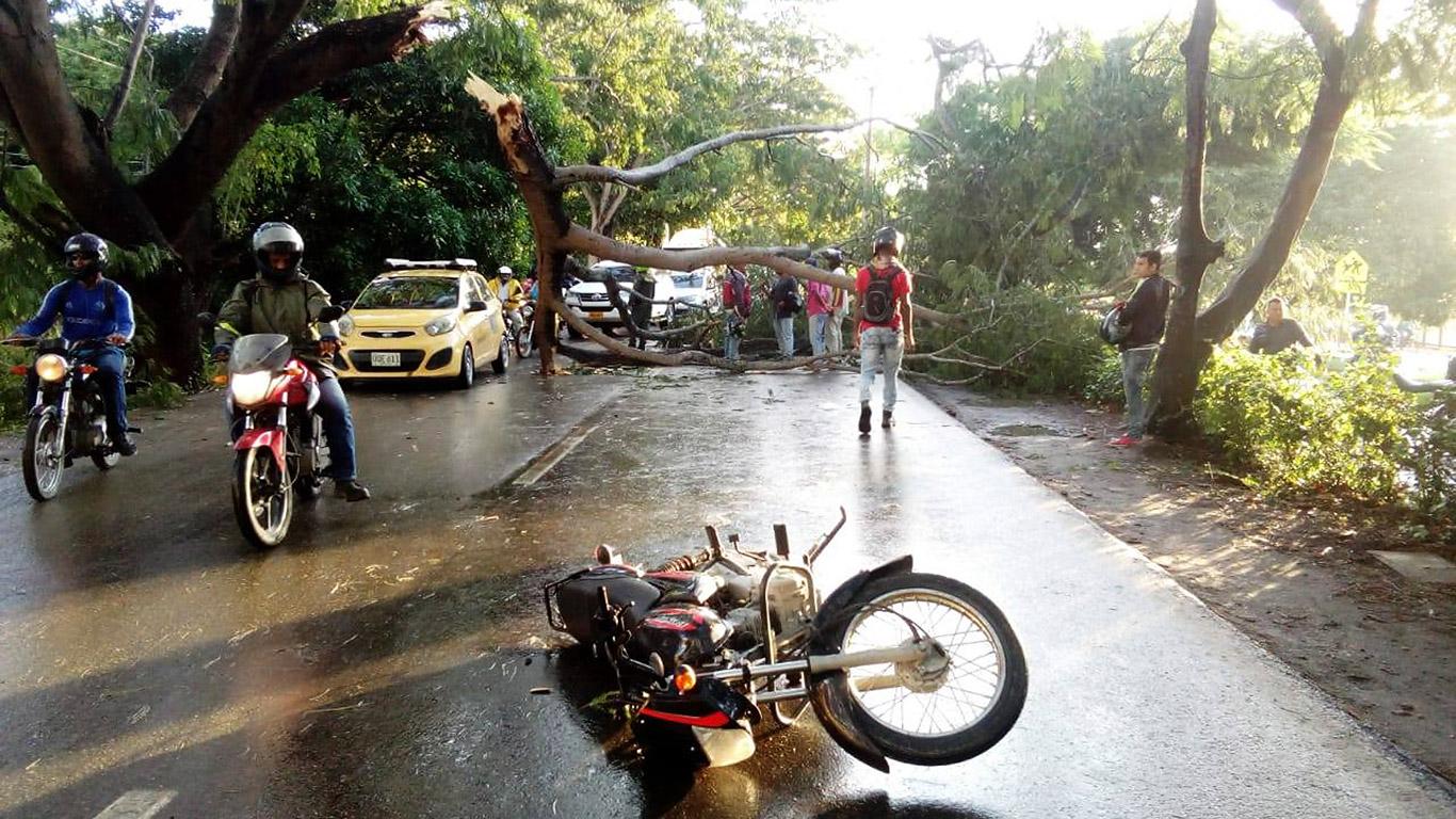 Si ninguna autoridad asume la vigilancia de los árboles en el acceso y salida a Montería, seguramente serán muchas más las víctimas.