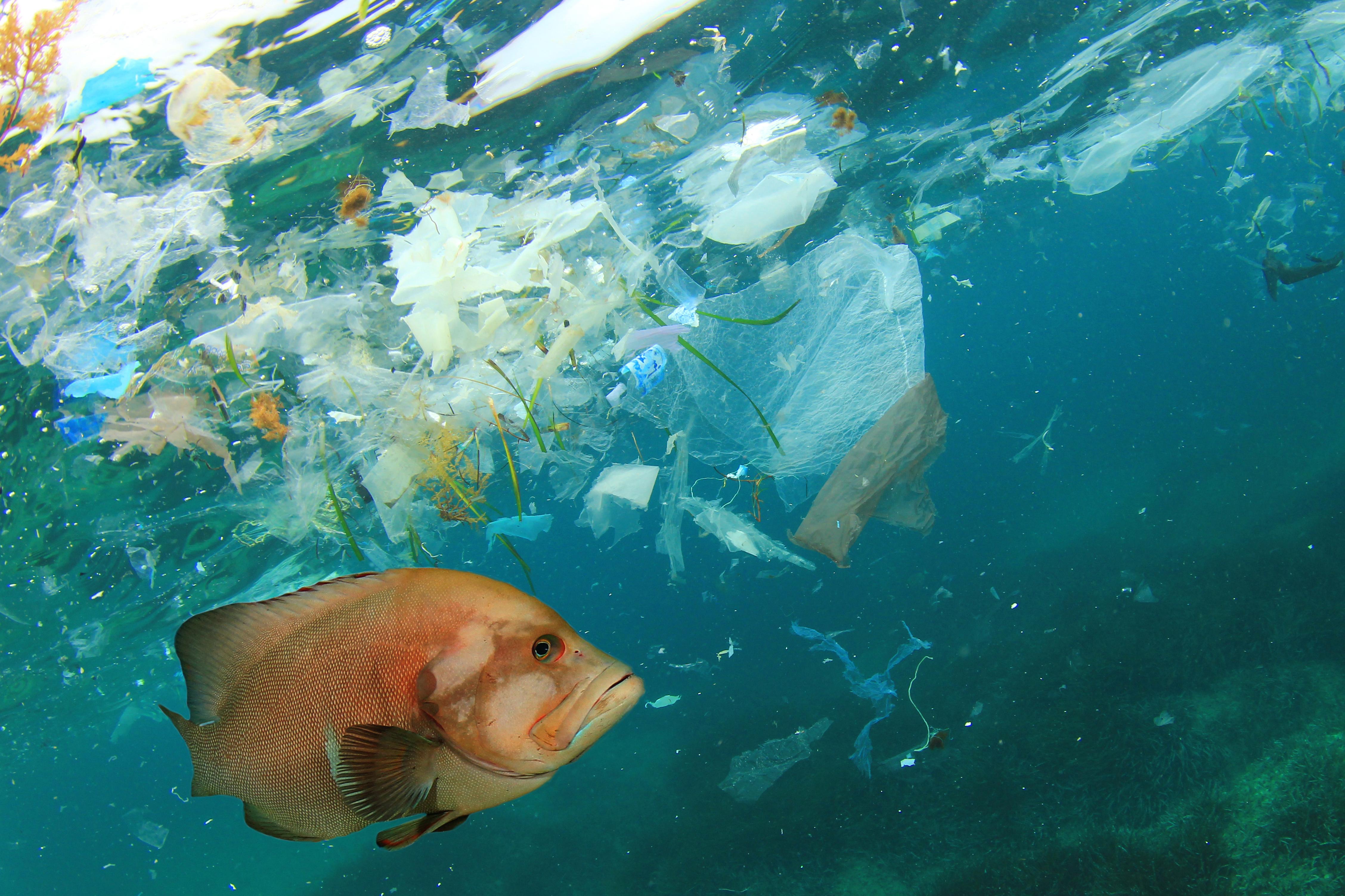 El plástico es ingerido por ballenas, delfines y otras especies marinas.