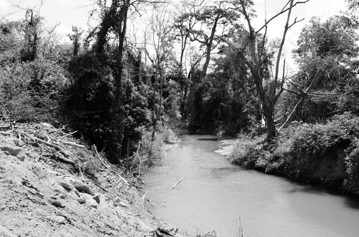 Parte de la deforestación que ha dejado las obras del nuevo cause.
