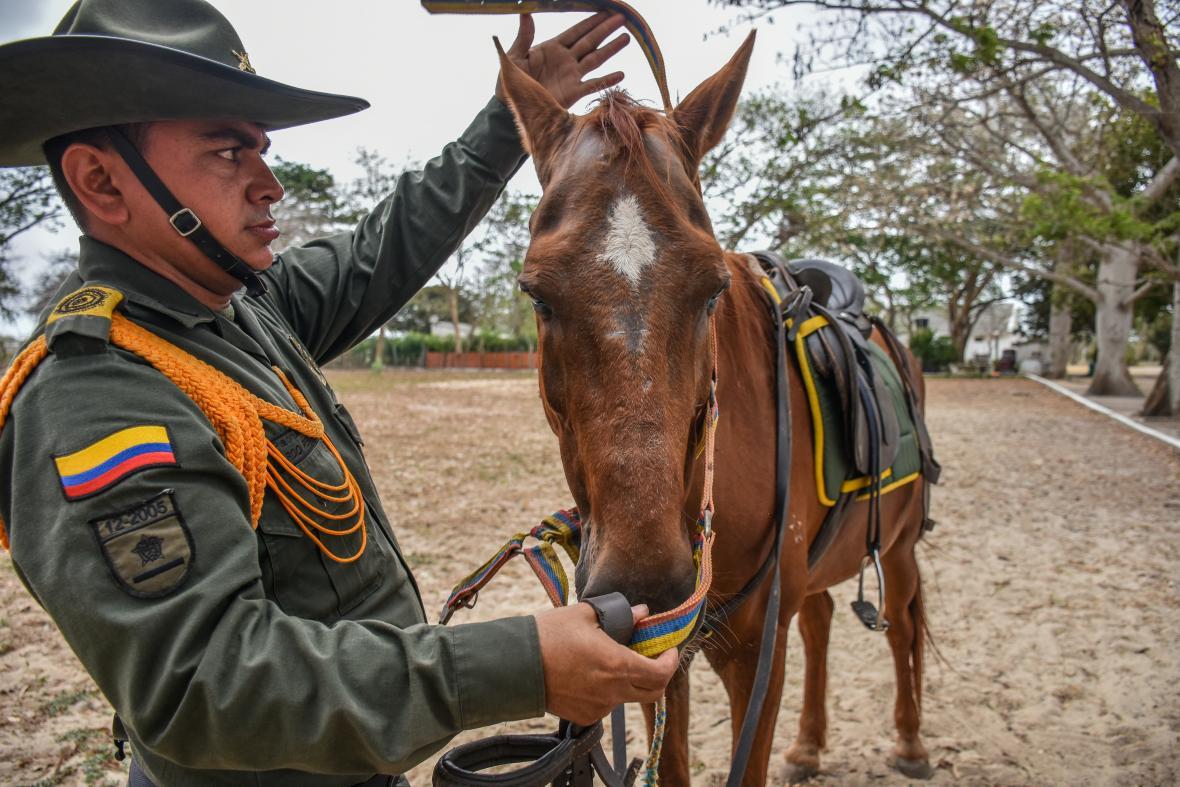 El uniformado atalaja al equino para montarlo.