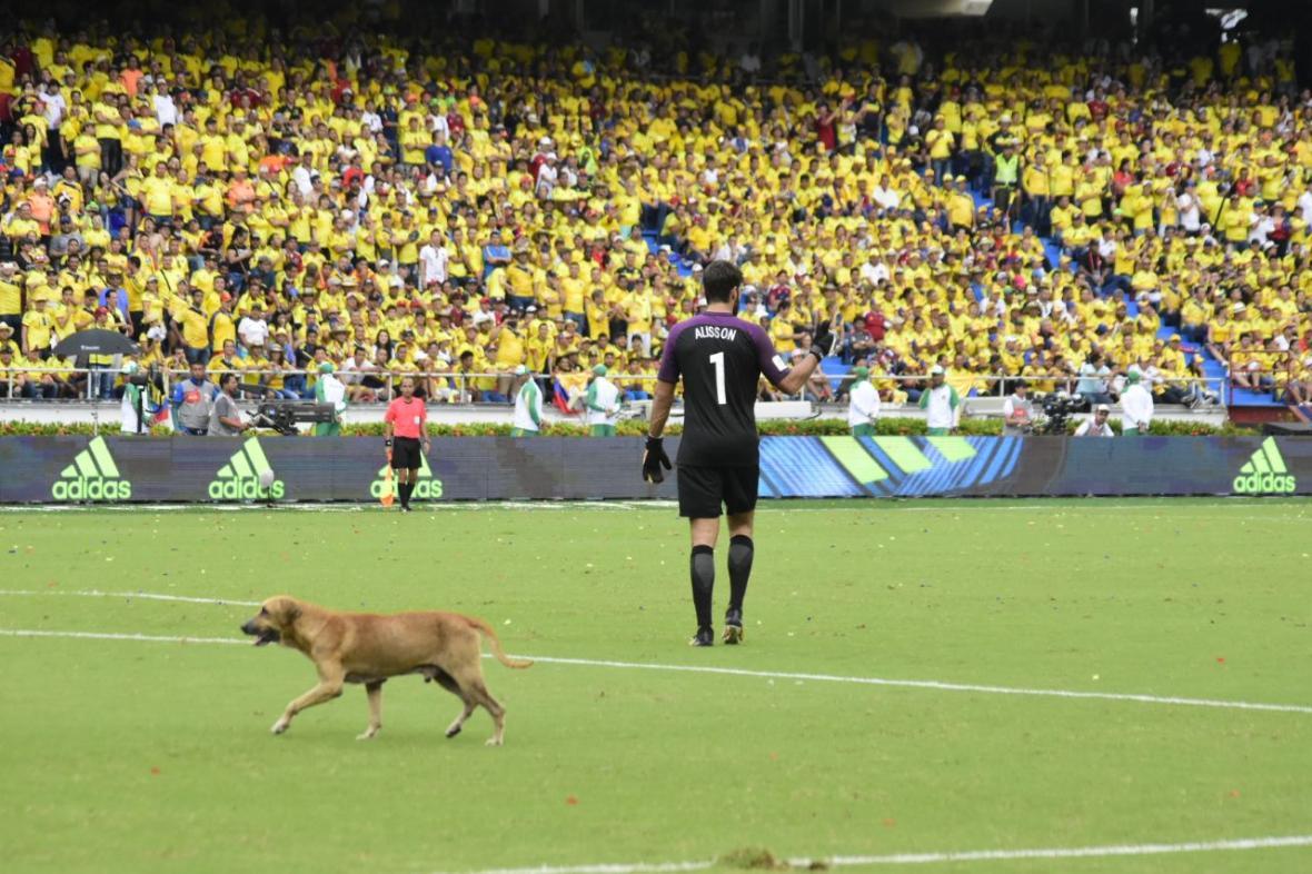 Momentos en que el animal invade el terreno de juego.