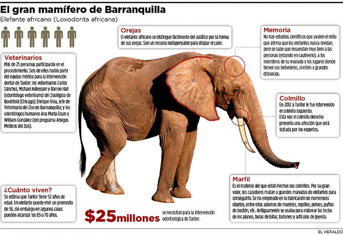 Contemporáneo Diseño Del Elefante De Uñas Colmillo Adorno - Ideas de ...
