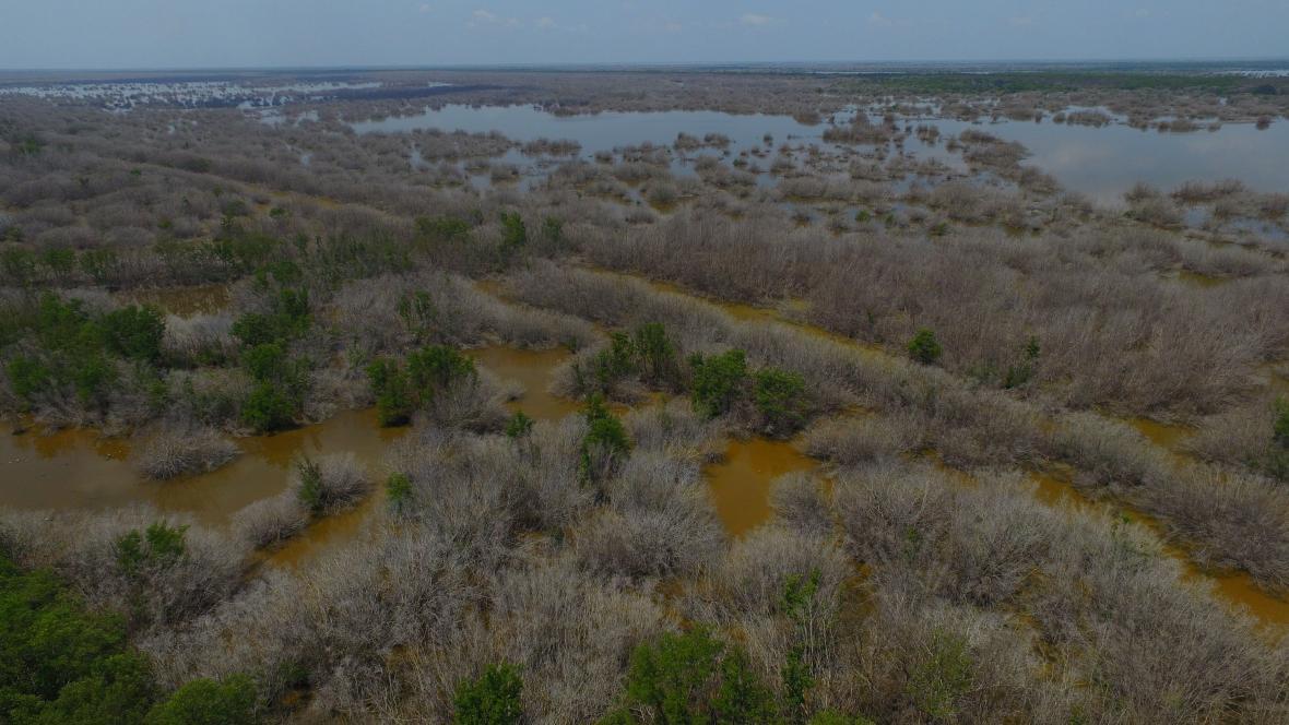 La foto muestra centenares de mangles ahogados por la hipersalinización del ecosistema.