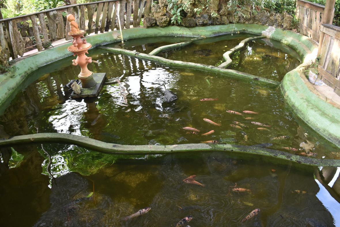 Varias especies de peces viven en este parque.