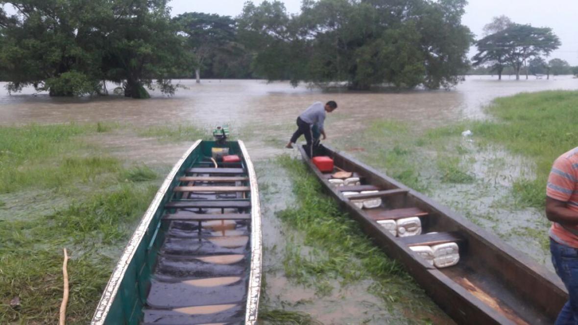 La mayor pérdida de los cultivos de arroz por inundaciones se reporta desde la Mojana, con 15.000 hectáreas, de acuerdo con balance de Fedearroz.