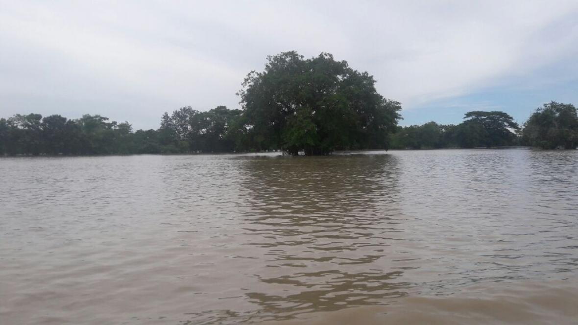 Esta imagen corresponde a una zona de la Mojana donde los cultivos de arroz quedaron dos metros por debajo de la inundación, lo que agrava el panorama.
