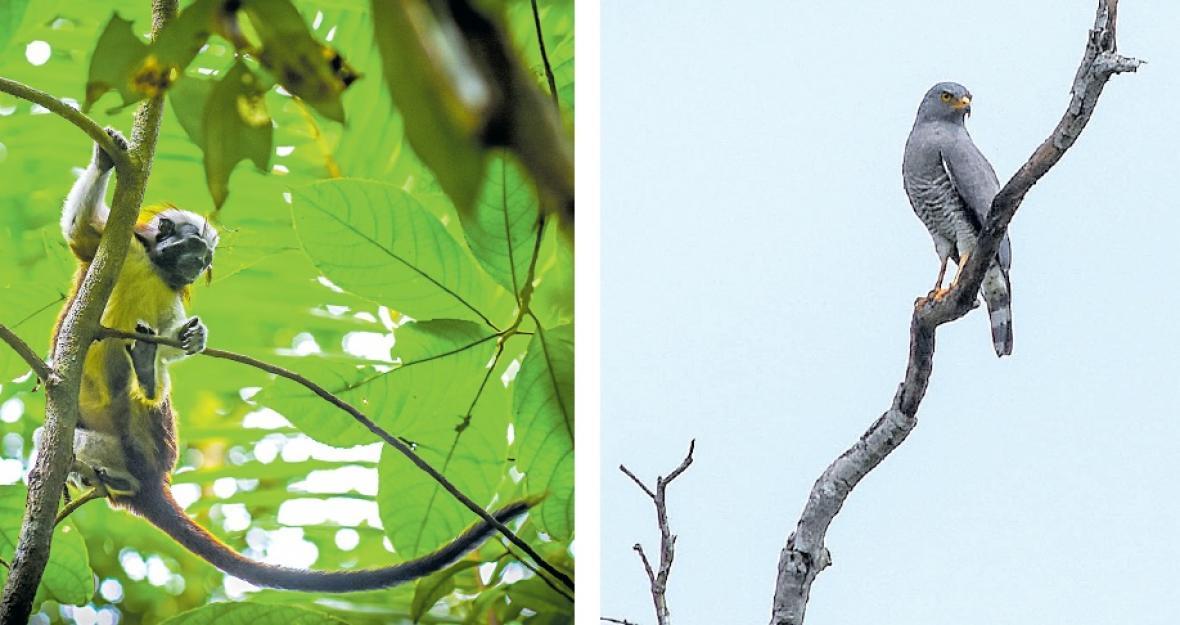 Resultado de imagen para Parque Natural Regional El Ceibal