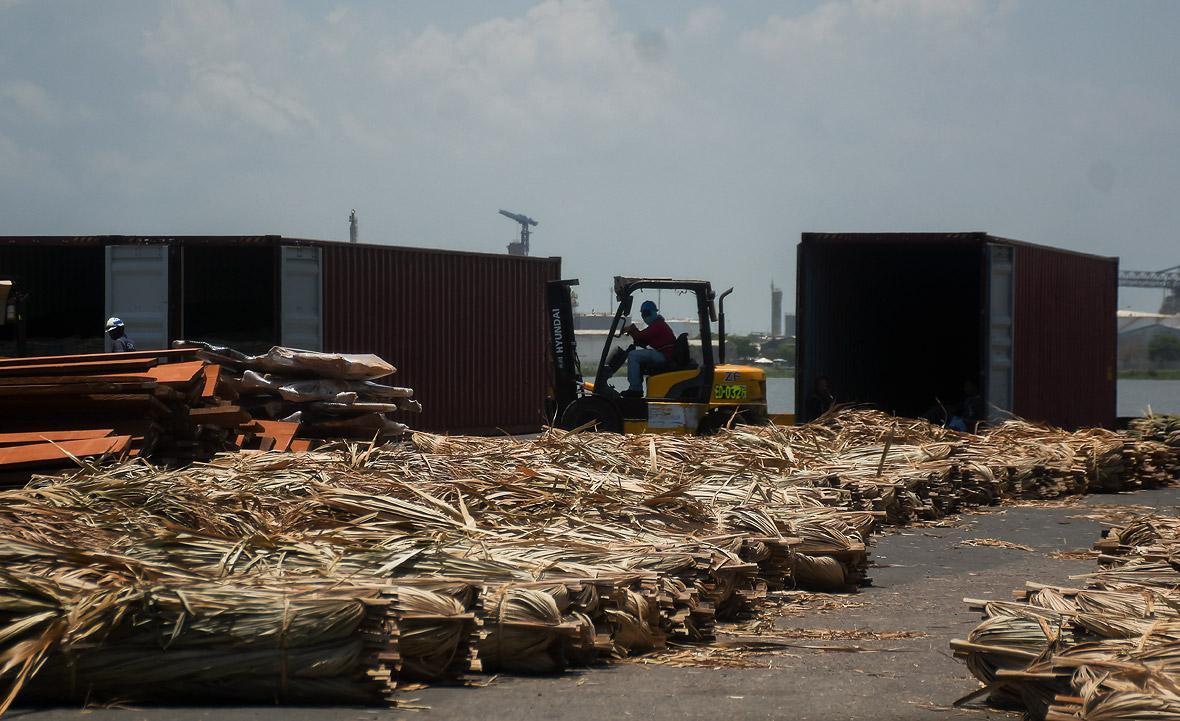 Un operario recoge palma para exportar en el puerto.