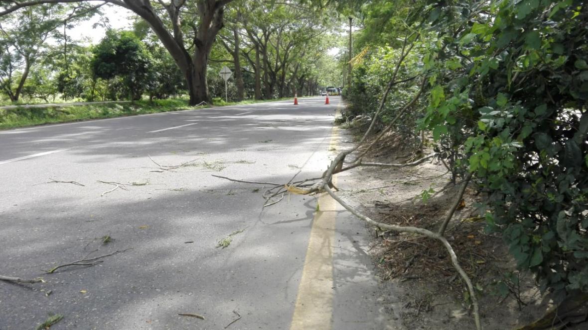 La Corporación Autónoma Regional de los Valles del Sinú y San Jorge informó que hay más de 40 árboles  que requieren ser podados inmediatamente por riesgo de caída.