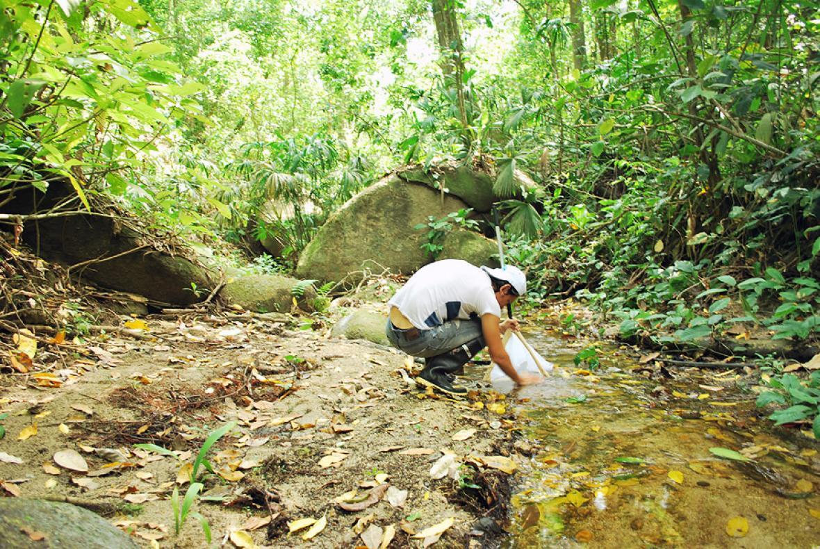 Investigador recoge muestras en el Parque Tayrona.