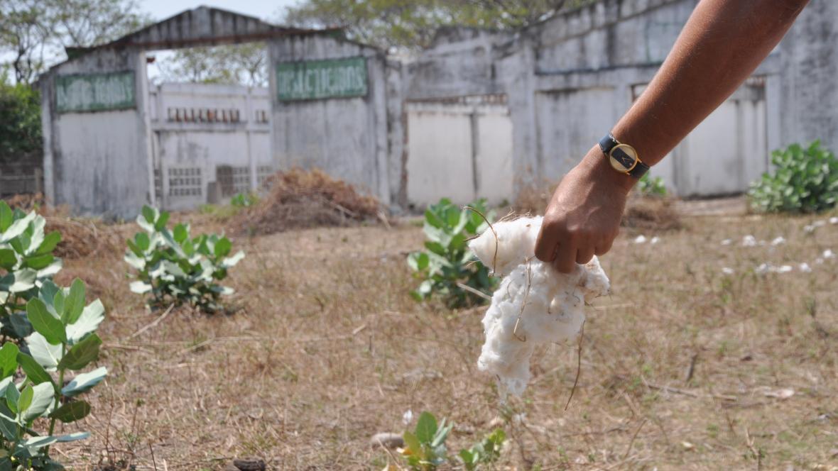 Antiguas bodegas donde se almacenaba el algodón que se cultivaba en Codazzi, Cesar, hoy están en ruinas.