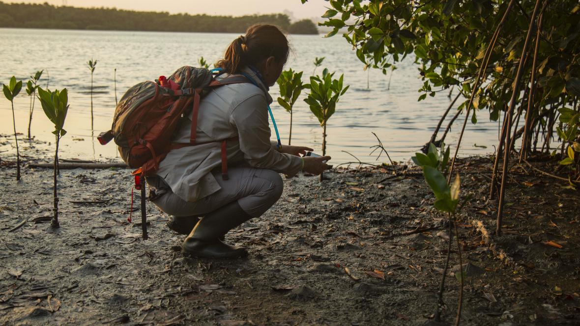 En la Ciénaga de Mallorquín los visitantes palparon el daño que sufren los manglares.