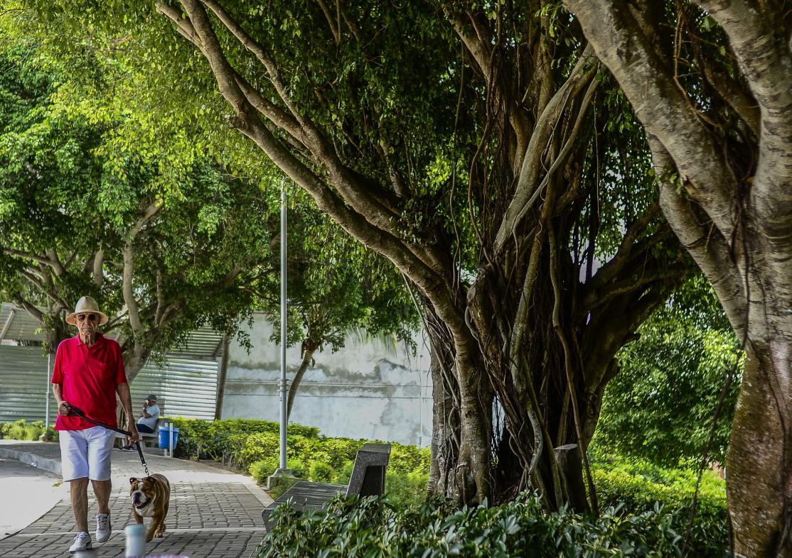 Carlos Gómez pasea a su mascota en el parque La Cumbre, cubierto por una variedad de siembras.