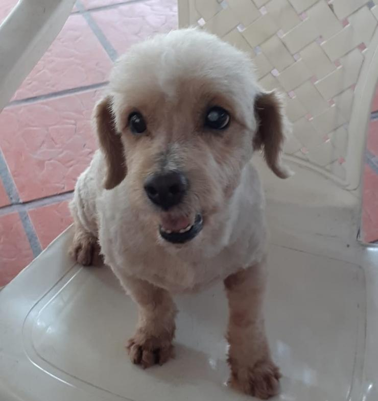 Mascotas Wasapea | Estos perritos se encuentran extraviados