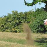 El Caujaral, protagonista en varias categorías del Abierto de Golf del Caribe