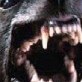 Muere una niña de 11 meses tras ser atacada por un perro en Inglaterra