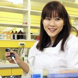 Estudio japonés sobre células madre contenía partes fraudulentas