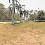 Estado actual del césped  de la zona centra de los jardines del Cortissoz.