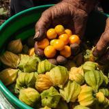 En la Costa es donde menos se consumen frutas y hortalizas