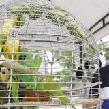 Entrega voluntaria de 70 aves hicieron cartageneros a autoridades