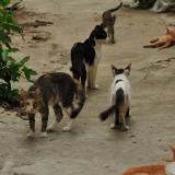 Reubican a 75 gatos que estaban abandonados en casa de El Rosario