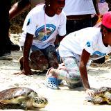 Las tortugas que volvieron al mar