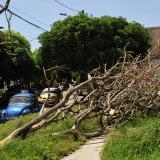 En el barrio El Prado denuncian nuevo caso de arboricidio