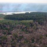 El 58 % de la deforestación en Colombia ocurrió en municipios en conflicto