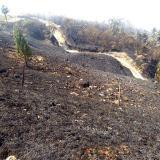 Controlan incendio en Cerro Kennedy, Sierra Nevada