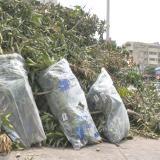 Denuncian caso de arboricidio en el barrio Altos del Prado