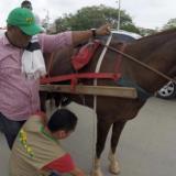Procuraduría reitera solicitud a Alcaldía de Cartagena de suspender coches turísticos
