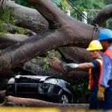 Dos obreros trabajan para retirar un árbol que cayó sobre un vehículo a causa de la tormenta tropical Ott este jueves en Ciudad de Panamá.