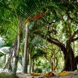 Vecinos piden proteger árboles del parque de la Electrificadora